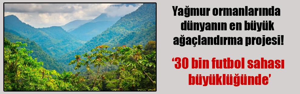 Yağmur ormanlarında dünyanın en büyük ağaçlandırma projesi!