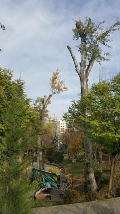 ağaç-2