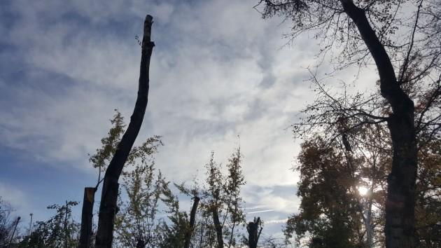 ağaç-4