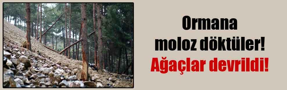 Ormana moloz döktüler! Ağaçlar devrildi!