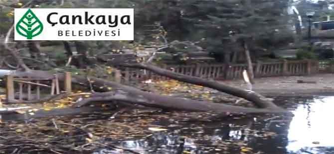 Çankaya Belediyesi 48 ağacı katletti