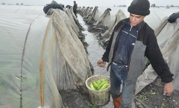 Tarsus'ta üretici, ürünlerini selden kurtarmaya çalışıyor