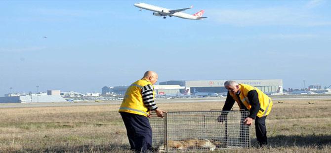 Pilotlara pas geçirten köpekler için tim kuruldu