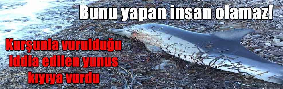 Bunu yapan insan olamaz! Kurşunla vurulduğu iddia edilen yunus kıyıya vurdu