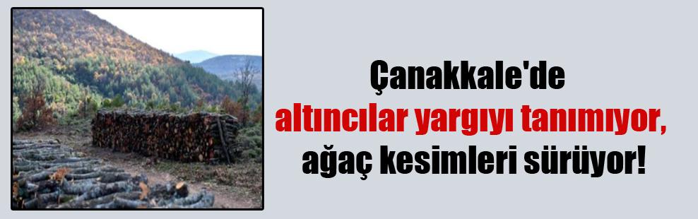 Çanakkale'de altıncılar yargıyı tanımıyor, ağaç kesimleri sürüyor!