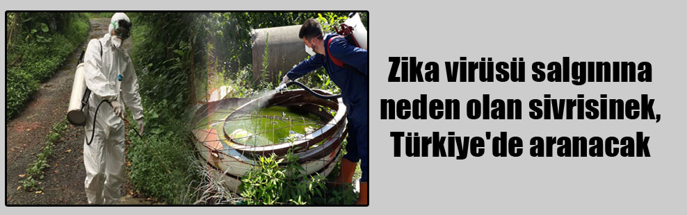Zika virüsü salgınına neden olan sivrisinek, Türkiye'de aranacak