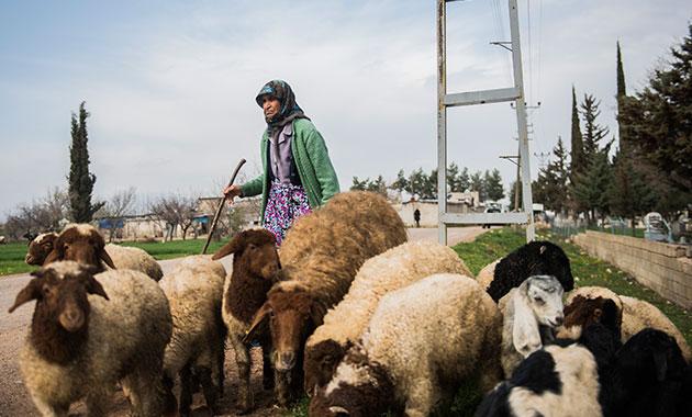 86 yaşında, sınırın sıfır noktasında çobanlık yapıyor