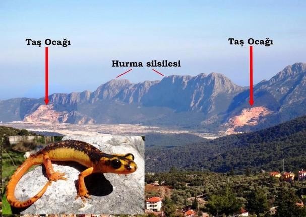 Antalya Semenderi taş ocaklarının bulunduğu dağlık alanda yaşıyor (fotoğraf Bayram Göçmen)