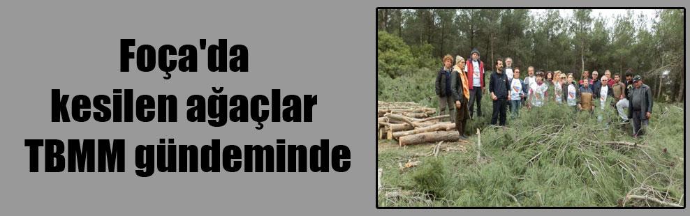 Foça'da kesilen ağaçlar TBMM gündeminde