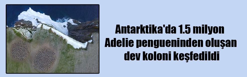 Antarktika'da 1.5 milyon Adelie pengueninden oluşan dev koloni keşfedildi