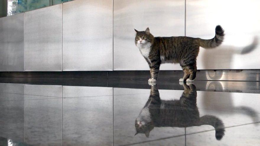 CHP'nin kedisi 'Şero'dan yeni haber geldi