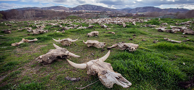 Tokat'taki boş arazide hayvan kemikleri bulundu