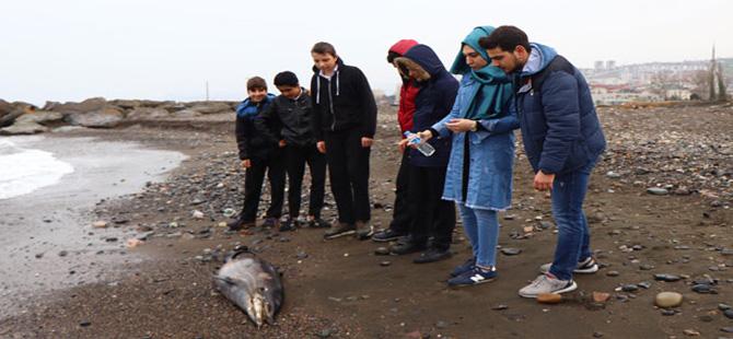 Trabzon'da ölü yunus karaya vurdu