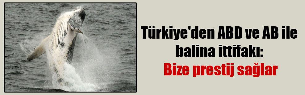 Türkiye'den ABD ve AB ile balina ittifakı: Bize prestij sağlar