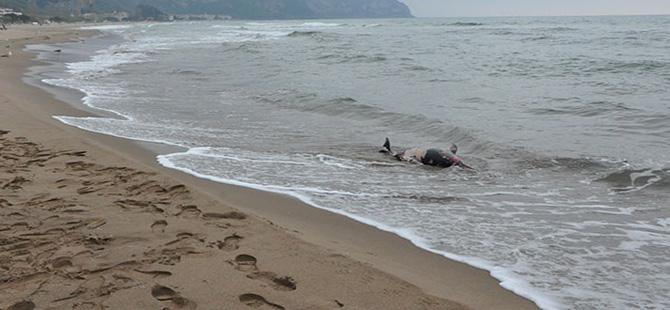Bartın'da ateş edilerek öldürülen iki yunus kıyıya vurdu