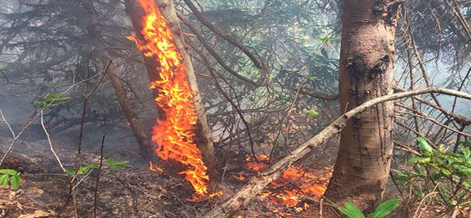 Çayeli'nde ormanda örtü yangını sürüyor