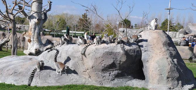 Eskişehir Hayvanat Bahçesi'ne 1 yılda 650 bin ziyaretçi
