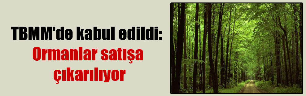 TBMM'de kabul edildi: Ormanlar satışa çıkarılıyor