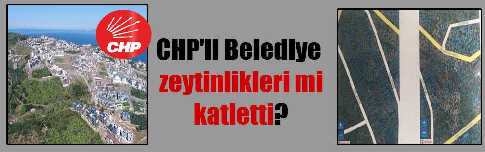 CHP'li Belediye zeytinlikleri mi katletti?