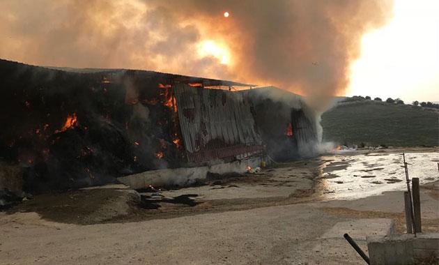Alevler 15 bin balya samanı kül etti
