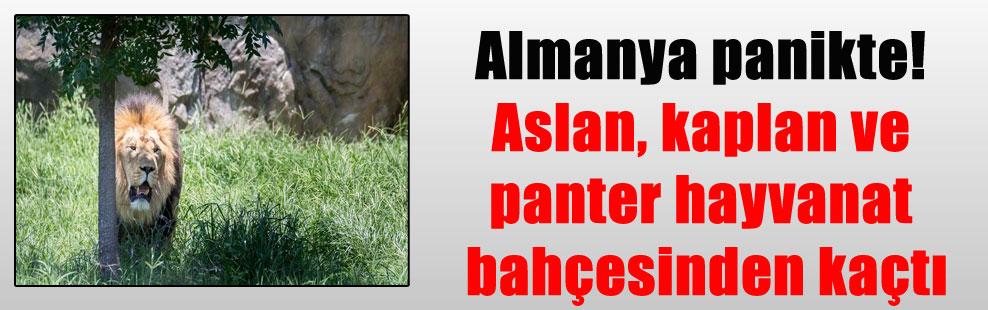 Almanya panikte! Aslan, kaplan ve panter hayvanat bahçesinden kaçtı