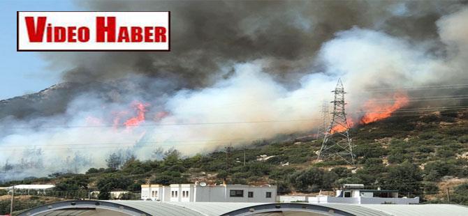 Bodrum Ortakent'te korkutan yangın!