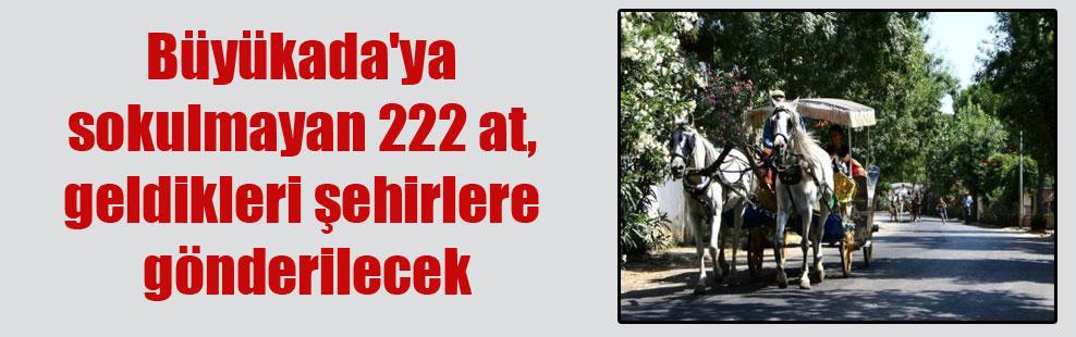 Büyükada'ya sokulmayan 222 at, geldikleri şehirlere gönderilecek
