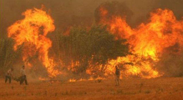 Tunceli'de yangın