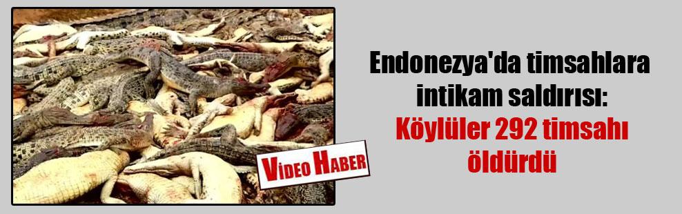 Endonezya'da timsahlara intikam saldırısı: Köylüler 292 timsahı öldürdü