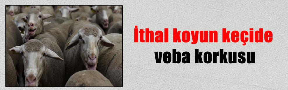 İthal koyun keçide veba korkusu