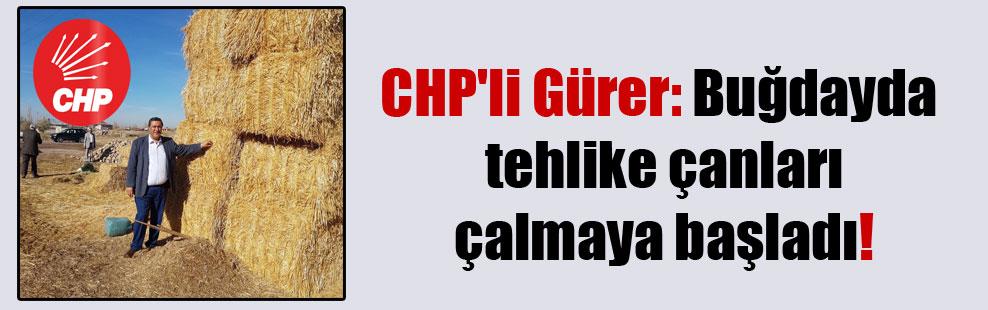 CHP'li Gürer: Buğdayda tehlike çanları çalmaya başladı!