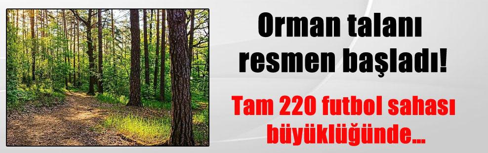Orman talanı resmen başladı! Tam 220 futbol sahası büyüklüğünde…