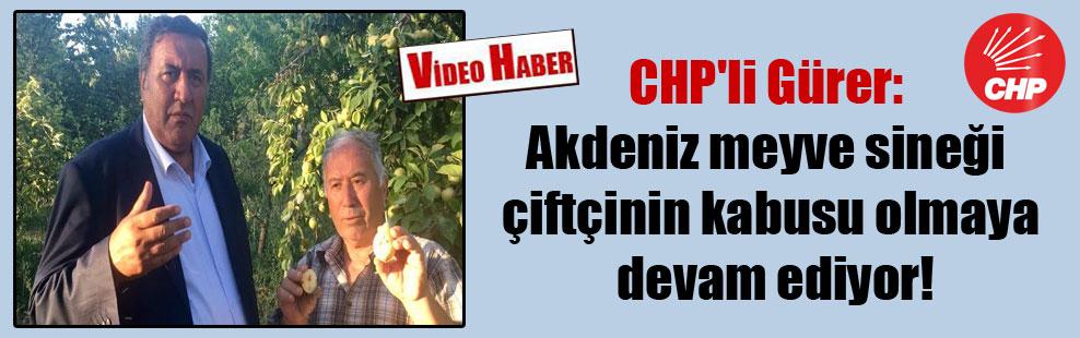 CHP'li Gürer: Akdeniz meyve sineği çiftçinin kabusu olmaya devam ediyor!