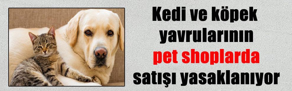 Kedi ve köpek yavrularının pet shoplarda satışı yasaklanıyor
