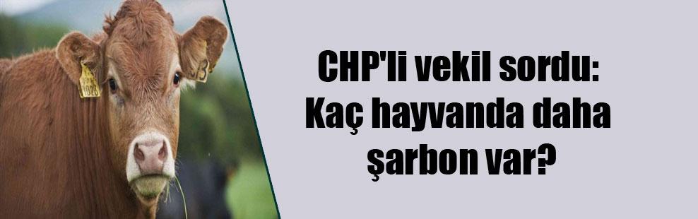 CHP'li vekil sordu: Kaç hayvanda daha şarbon var?