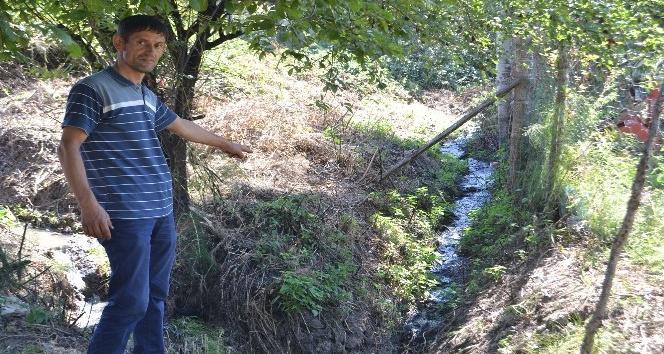 Mahallenin kanalizasyonu ağaçları kuruttu