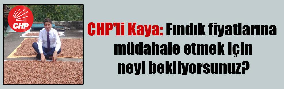 CHP'li Kaya: Fındık fiyatlarına müdahale etmek için neyi bekliyorsunuz?