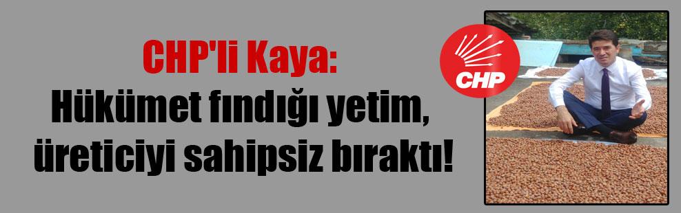 CHP'li Kaya: Hükümet fındığı yetim, üreticiyi sahipsiz bıraktı!
