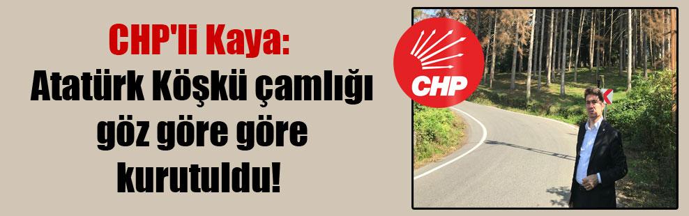 CHP'li Kaya: Atatürk Köşkü çamlığı göz göre göre kurutuldu!