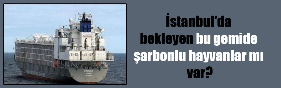 İstanbul'da bekleyen bu gemide şarbonlu hayvanlar mı var?