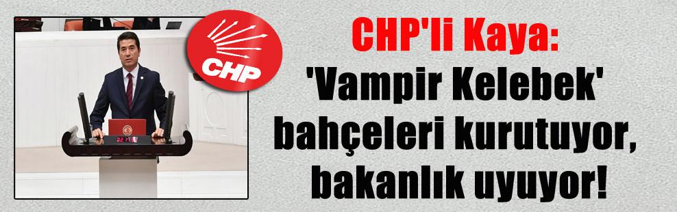 CHP'li Kaya: 'Vampir Kelebek' bahçeleri kurutuyor, bakanlık uyuyor!