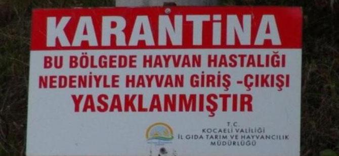 Kocaeli'de şarbon paniği: 3 köy karantinaya alındı