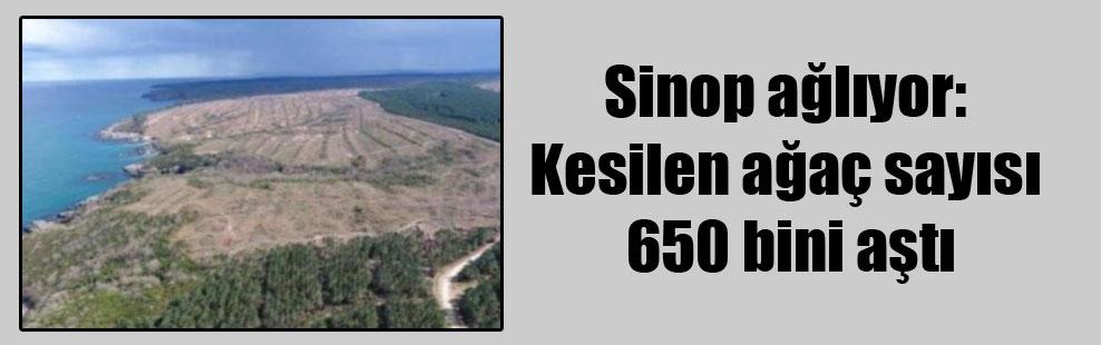 Sinop ağlıyor: Kesilen ağaç sayısı 650 bini aştı
