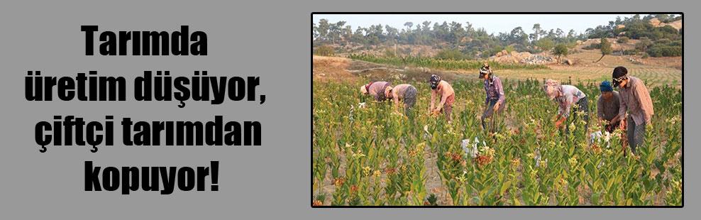 Tarımda üretim düşüyor çiftçi tarımdan kopuyor!