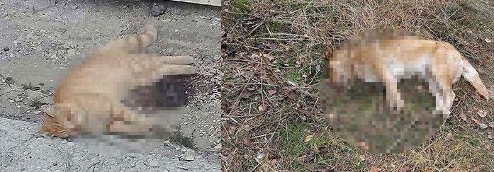 Ankara'da hayvan katliamı