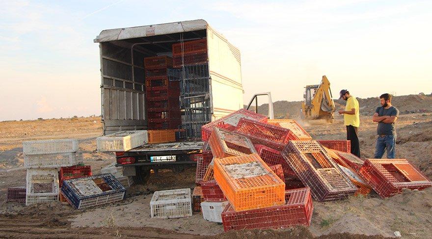 Manavgat'ta tavukların canlı canlı imha edildiği iddiası