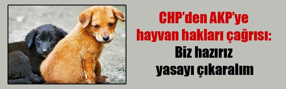 CHP'den AKP'ye hayvan hakları çağrısı: Biz hazırız yasayı çıkaralım