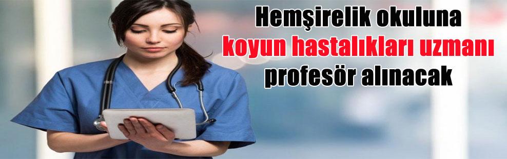 Hemşirelik okuluna koyun hastalıkları uzmanı profesör alınacak