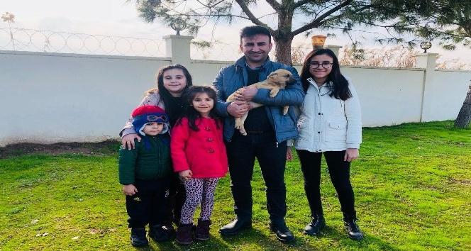 Manisa'da 5 binden fazla sokak hayvanı tedavi edildi