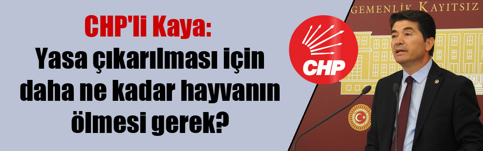 CHP'li Kaya: Yasa çıkarılması için daha ne kadar hayvanın ölmesi gerek?